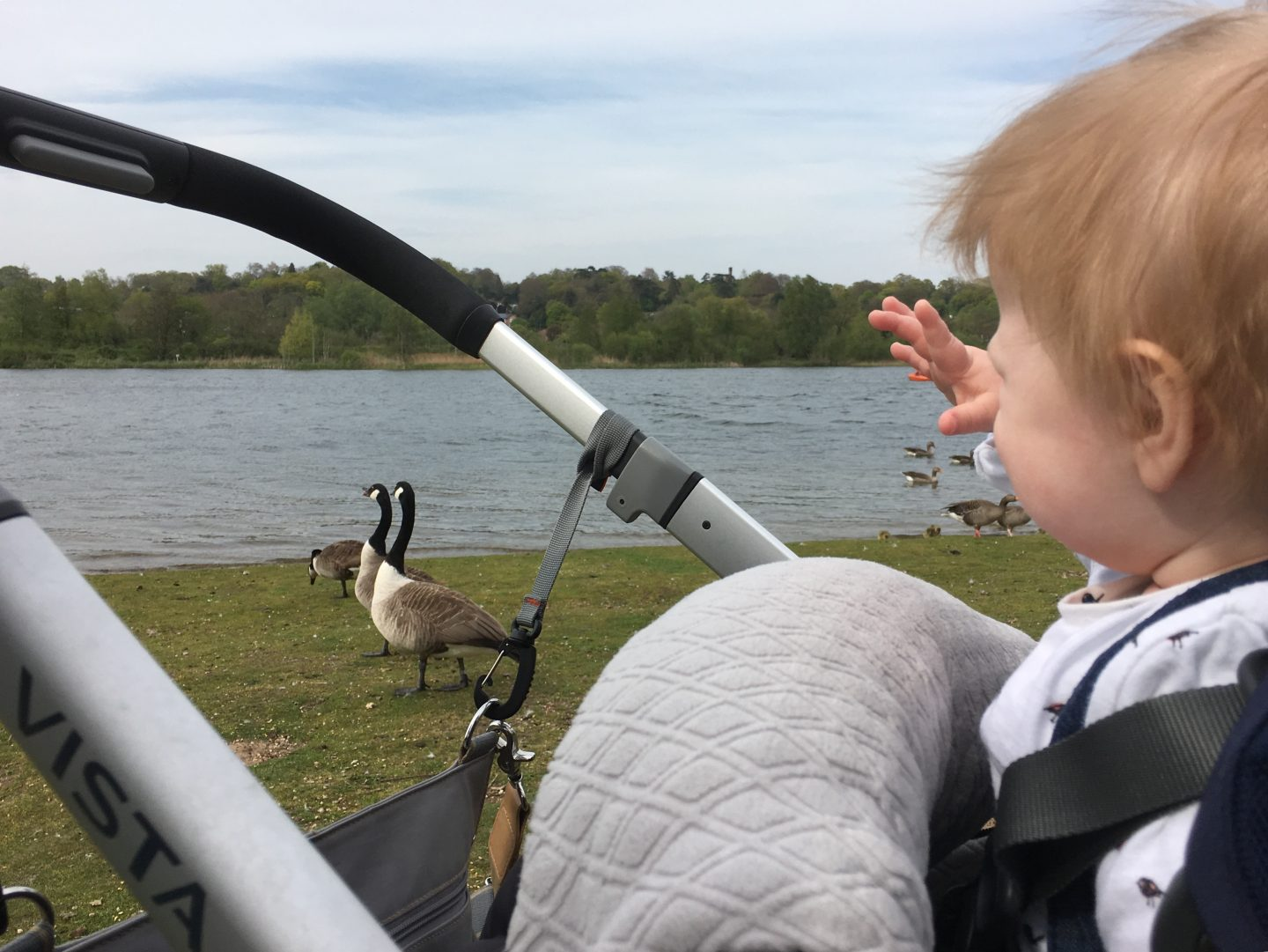 Whitlingham Broad Norwich, pushchair friendly walks Norwich, pram friendly walks Norwich Norfolk