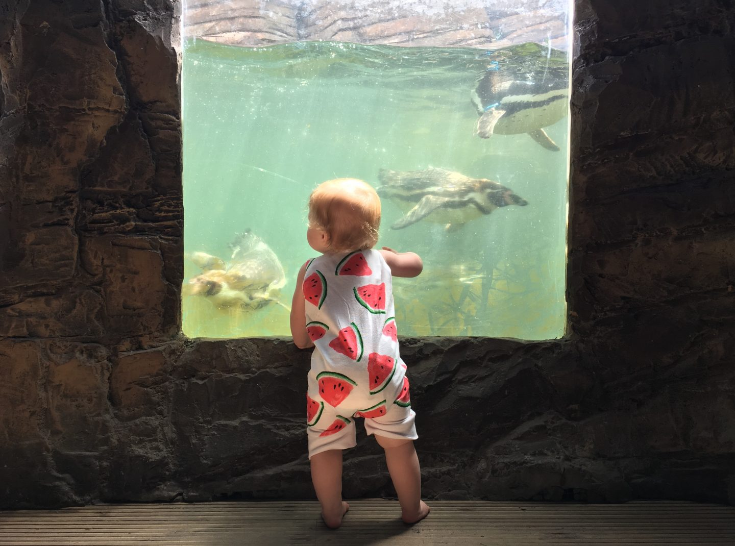 Sea Life Great Yarmouth Review