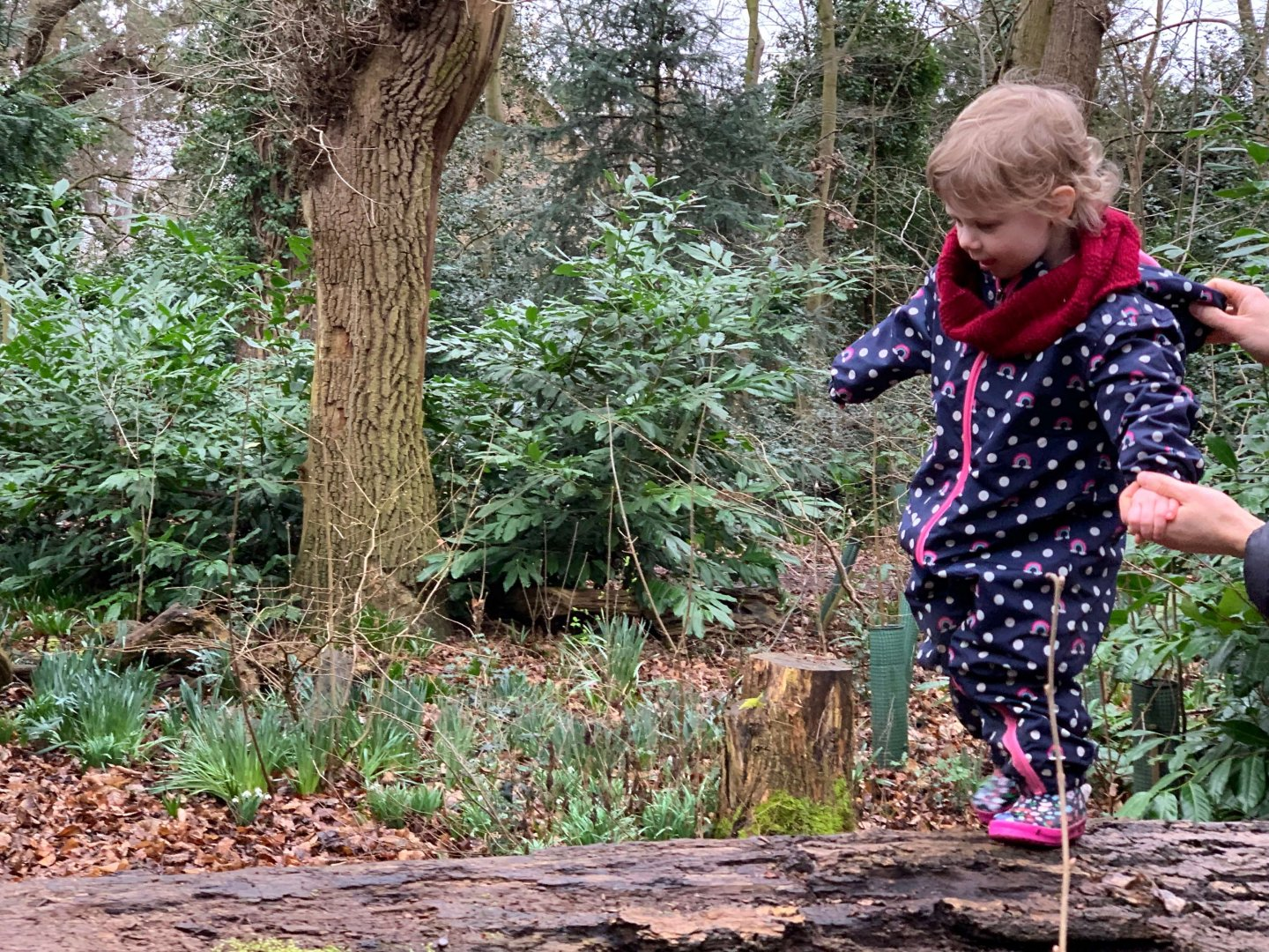 M walking along a log